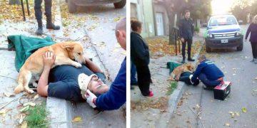 Эти фото докажут, что животные умеют любить беззаветно! До слез!