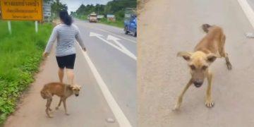 Тощий щенок подбегал к каждому прохожему, выпрашивая еду, но все проходили мимо
