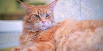 Про хомяка, про кота и ночной сон. Убойная история.