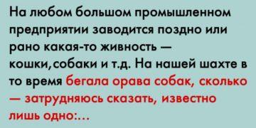 Бабуля не знает всей правды о компании! )))