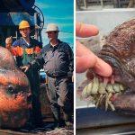 Мурманский моряк публикует фото странных обитателей моря