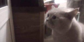 Кот Яков так хотел выйти, что закричал человеческим голосом «Открой мне».