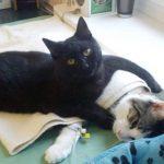 Чудесная история об огромном кошачьем сердце, которое готово согреть и утешить абсолютно всех