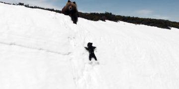 Сила воли медвежонка поражает! Медведица пытается спасти своего малыша на обрыве.