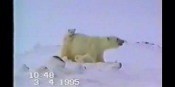 Медвежонок угодил в ловушку и даже медведица не могла ему помочь. Она стояла и не знала что делать
