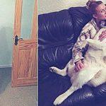 Ее собака вела себя очень странно. Женщина не понимала, что животное пытается её спасти!