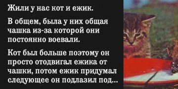 Жили у нас кот и ежик. В общем, была у них общая чашка из-за которой они постоянно воевали.