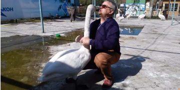 Лебедь Жора жалуется директору зоопарка. Вы будете очень удивлены, когда узнаете, кто его обижал!