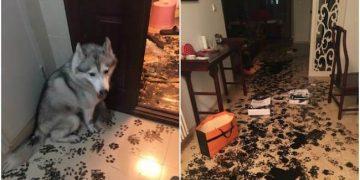Хозяева оставили пса одного дома, а когда вернулись — чуть не упали в обморок
