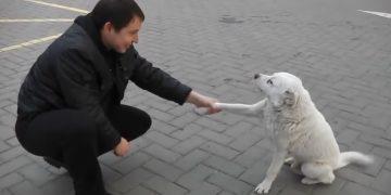 Дружелюбный уличный пёс
