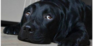 Беременная женщина просила не дарить ей собаку…