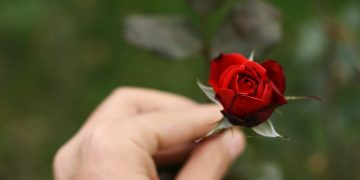 Никогда не забуду то чувство, когда держала розу в своих руках