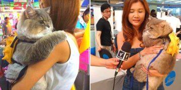 Знакомьтесь — это Бон-Бон. Он самый популярный кот Таиланда!