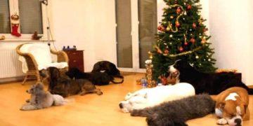 Собачки не могут дождаться, пока останутся дома одни