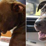 Справедливость для собаки, по кличке Кейтлин, восторжествовала: человек, причинившей ей увечье, приговорен к 15 годам лишения свободы