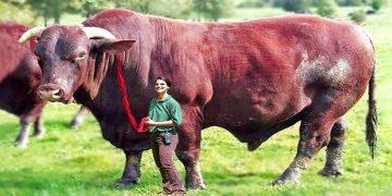 5 самых безумных животных, созданных учёными
