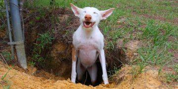 Собака устроила «раскопки» на заднем дворе. Когда она вернулась со своей находкой, хозяин чуть не лопнул от хохота!
