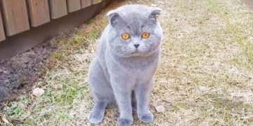 Хозяйка ругает своего кота. Но Космосу есть, что ей ответить!