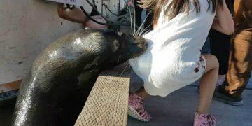 Морской котик за секунду утащил девушку под воду. Кадры моментально облетели интернет