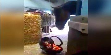 Малыша оставили в конюшне, а он расплакался. Не отводите взгляд от лошади!