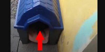 Парень поставил будку для бездомной беременной собаки. А спустя неделю не поверил своим глазам! Смотрим (ВИДЕО)