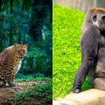 Самые красивые пушистые мамочки дикой природы!
