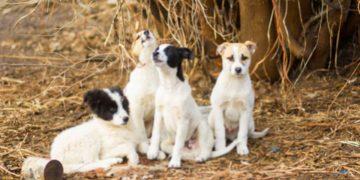 Мужчина нашел 4-х собачек, которые защищали одеяло. Подойдя ближе парень ахнул от удивления!
