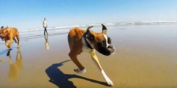 Этот двуногий пес — настоящий пример для всех! Никогда не отчаивайтесь!