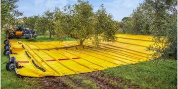 Сбор урожая оливок в промышленных масштабах. Вот бы так ягоды собирать…