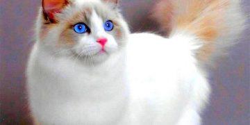 15 поверий о кошках. А знали ли вы?