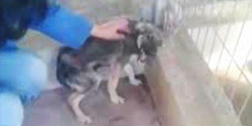 Эту собаку погладили первый раз в ее жизни! Ее реакция заставит Вас плакать!