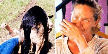 Она истекала кровью на обочине, а все проезжали мимо. То, что сделал этот странный пёс — невообразимо!