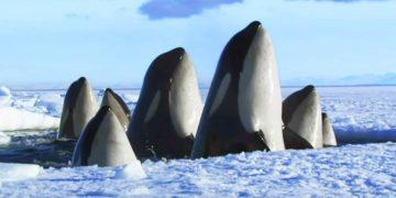 Это 2-минутное видео — лучшее, что я видел о дикой природе. Можно пересматривать вечно!