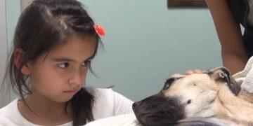Девочка посмотрела в глаза умирающей собаке… И вдруг случилось нечто поразительное!