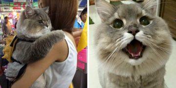 Самый популярный котик в Таиланде. Потрясающий пушистик!