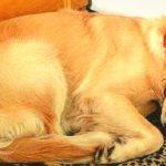 Домой к женщине приходил пес и просто спал. Но в один из дней к его ошейнику была прикреплена записка.