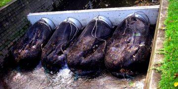 В Австралии придумали гениальное устройство, чтобы спасти водоемы от загрязнения