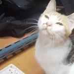 Бездомная кошка оставила необычный сюрприз в сумке хоккеиста. Милота!