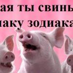 Какая ты свинья по знаку зодиака?
