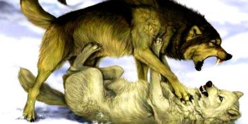 Мудрая притча про двух волков. Читается за 20 секунд, а запоминается на всю жизнь!