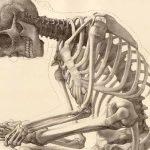Экзамен по анатомии