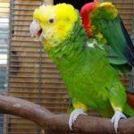 Свекрови поплохело от первых слов попугая